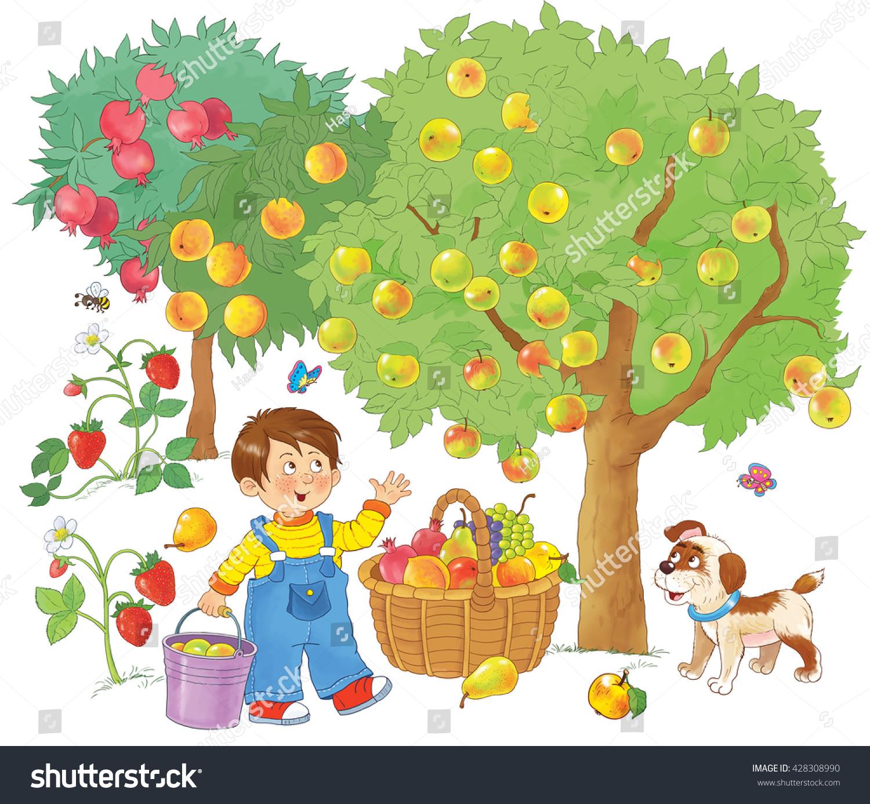 Cute Boy Fruit Garden Picking Apples Stock Illustration 428308990 ...