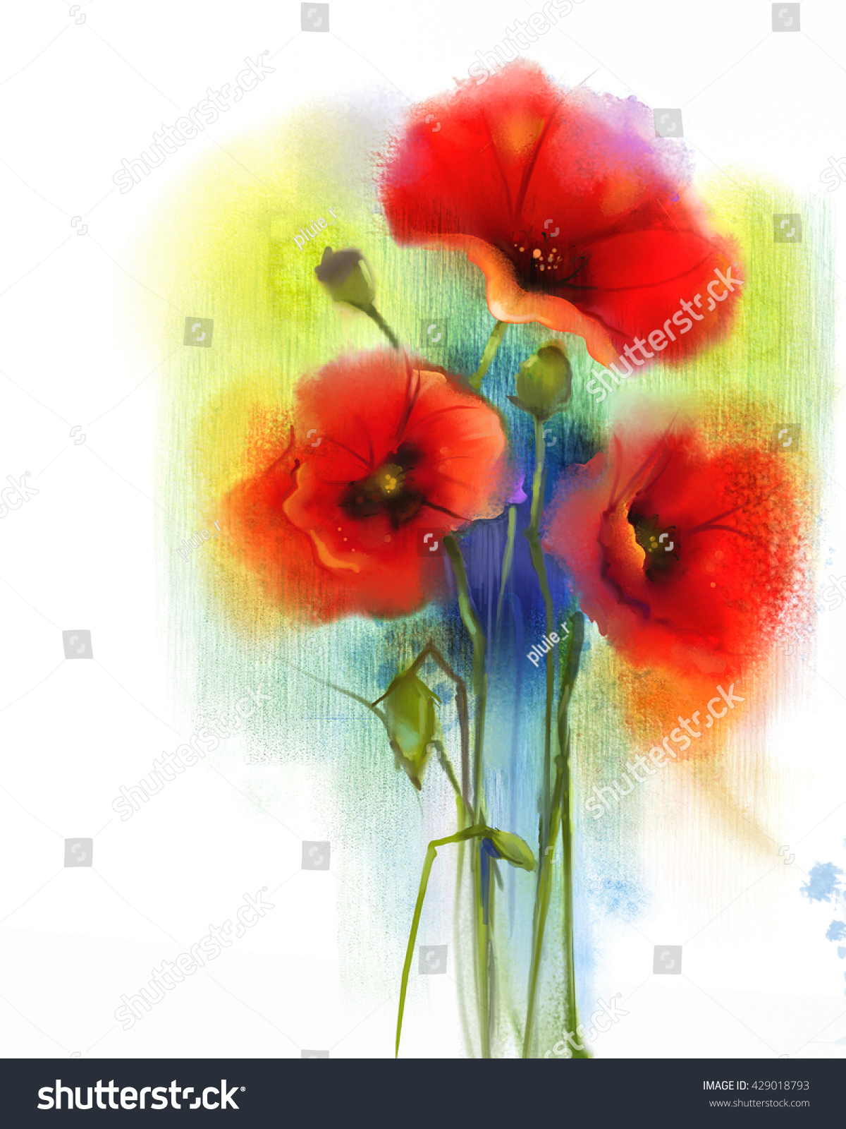 Watercolor Red Poppy Flower Painting Hand Stock Illustration