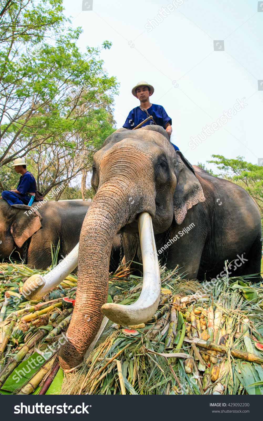 March 13: the day of the elephant in Thailand, the day of Pluto in the USA (Illinois). Holidays March 13 72