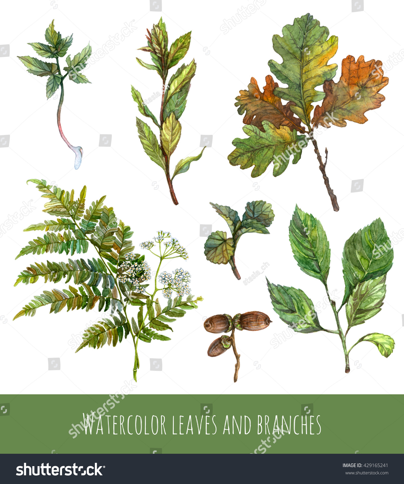 Watercolor Set Green Plants Tree Branches Stock Illustration