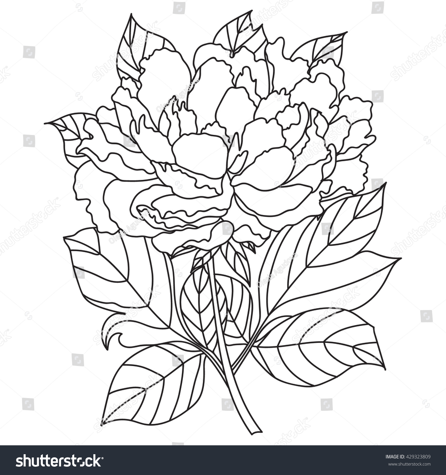 vector peony coloring book page adults stock vector royalty free