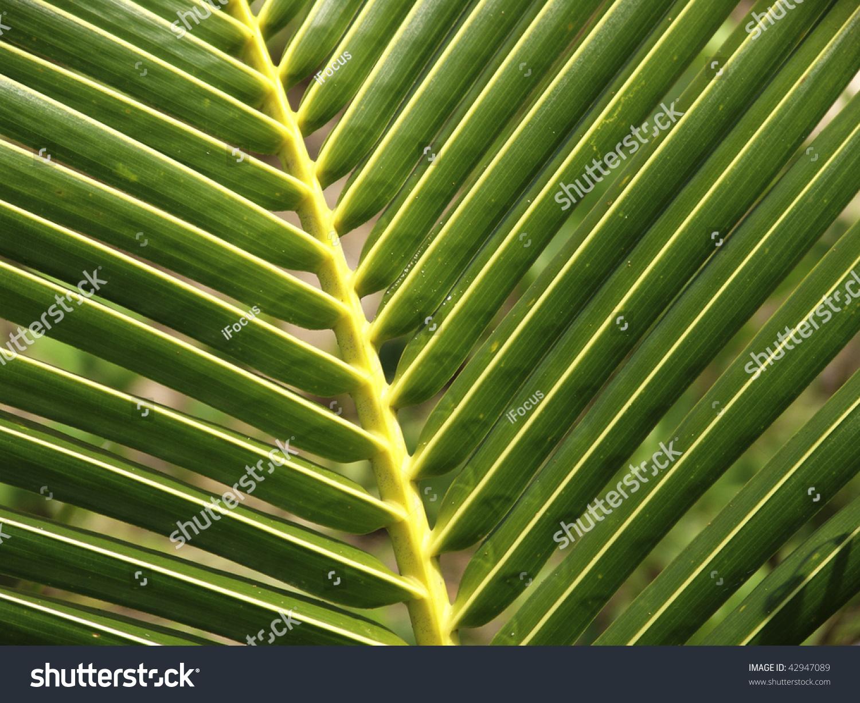 Detail of a palm leaf
