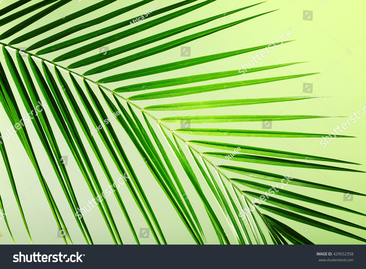 Green Leaf Palm Tree On Color Stock Photo 429552358 - Shutterstock