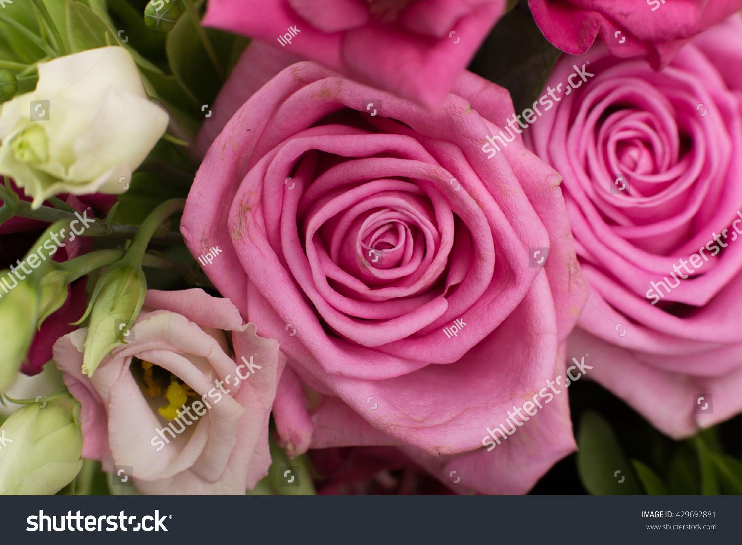 Beautiful Rose Artificial Real Flowers Image Stock Photo Edit Now