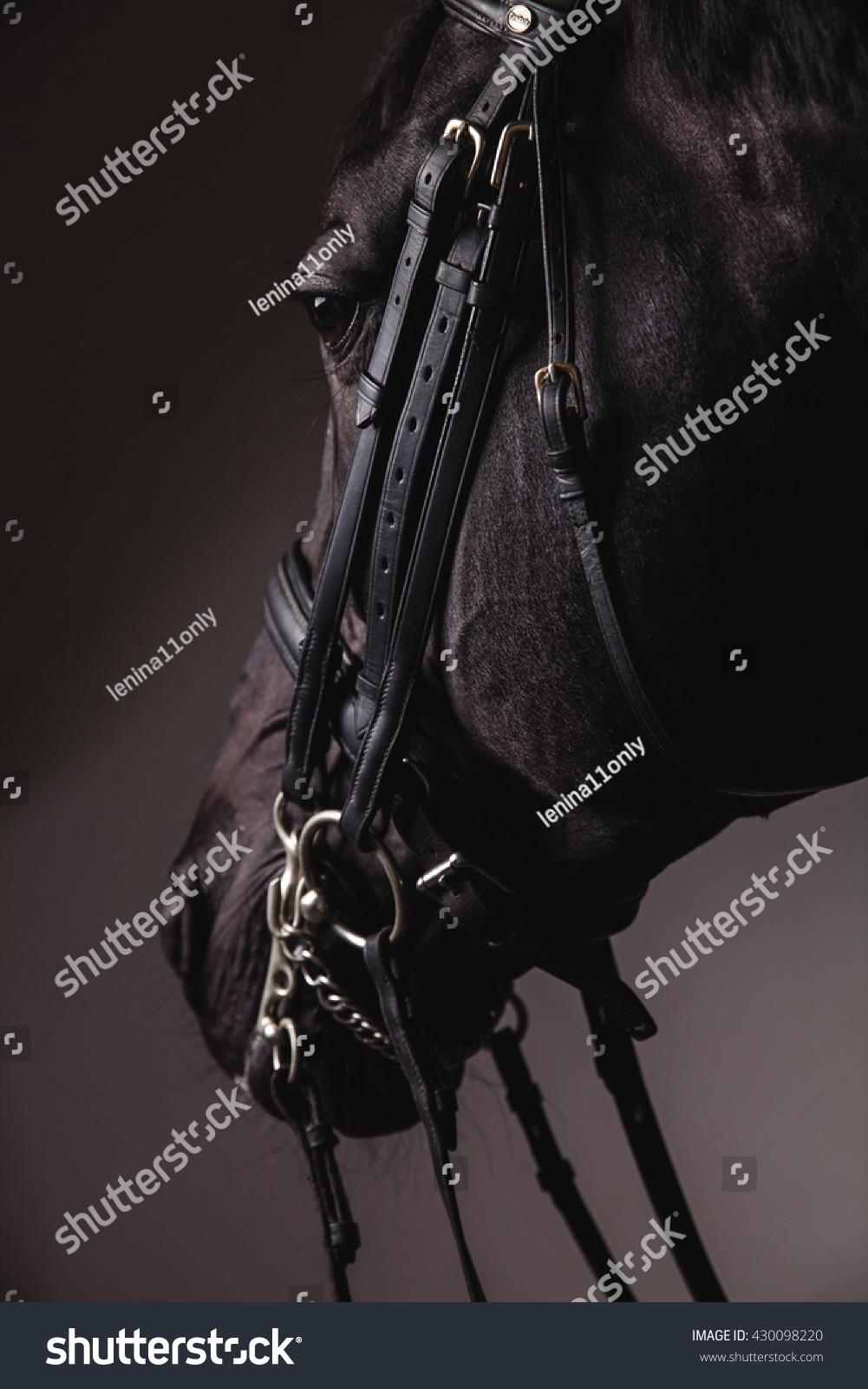 Black horse face close up - photo#44