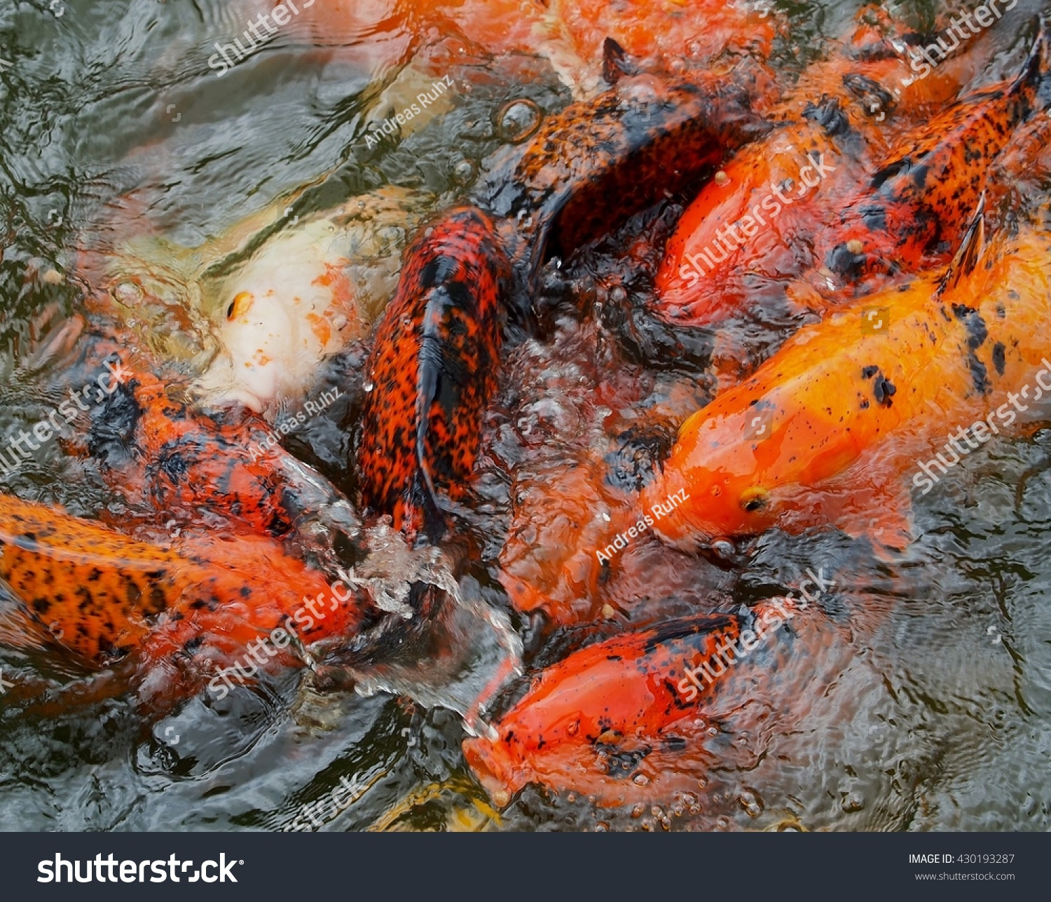 feed food for crap fish | EZ Canvas