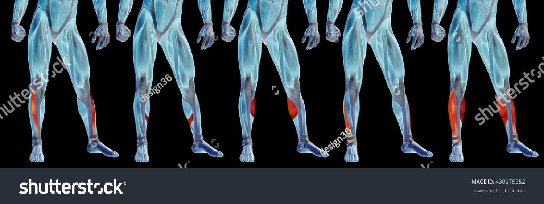 Concept Conceptual 3 D Front Lower Leg Stock Illustration 430275352