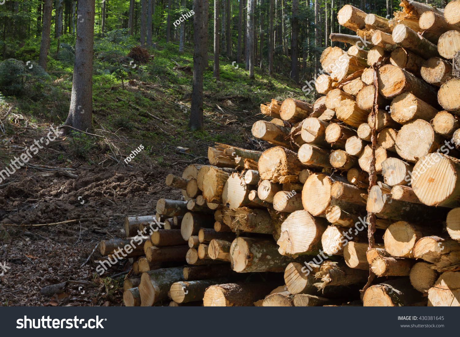 Pile Of Timber : Pile timber stock photo shutterstock