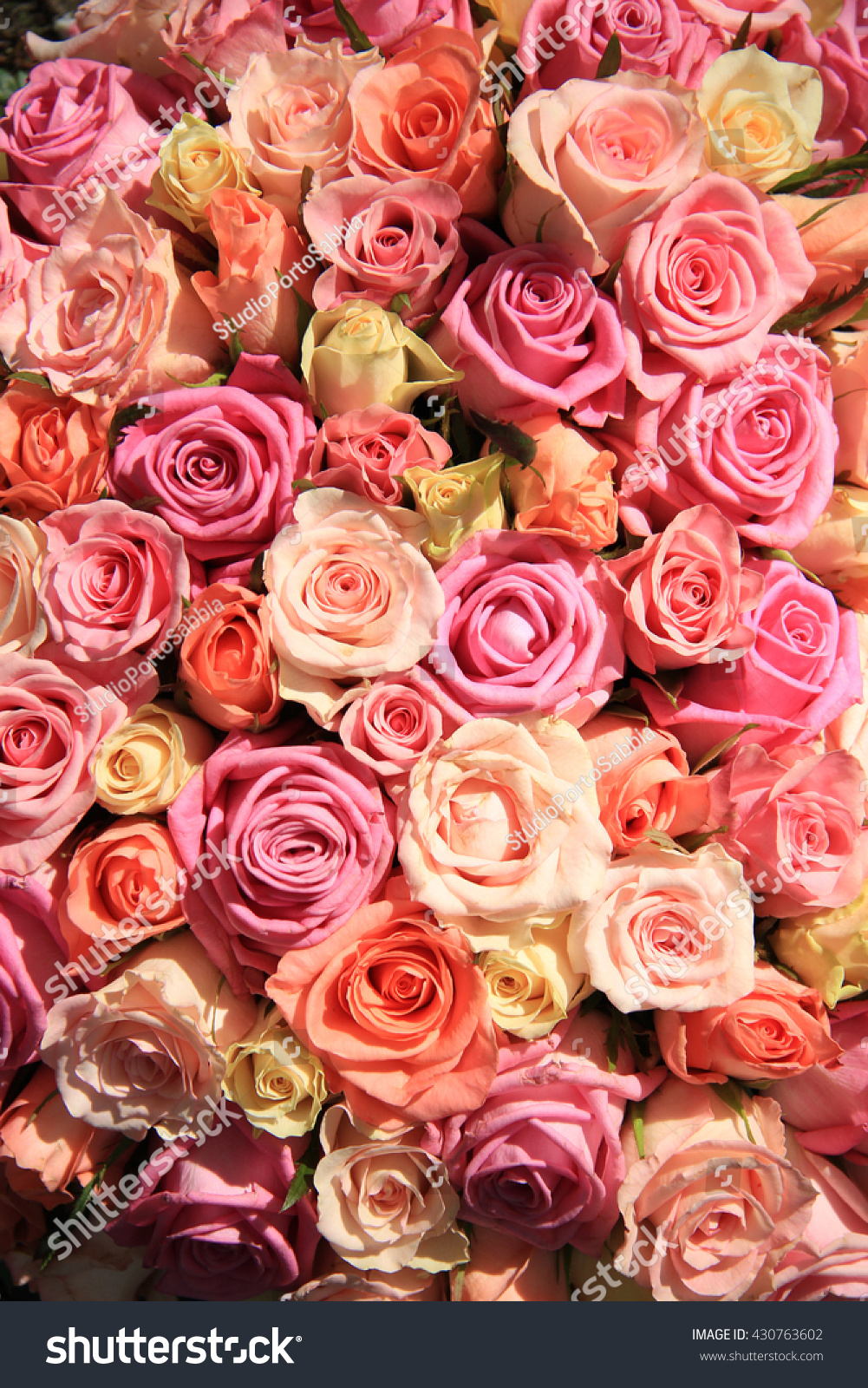Group Roses Various Shades Pink Wedding Stock Photo Edit Now