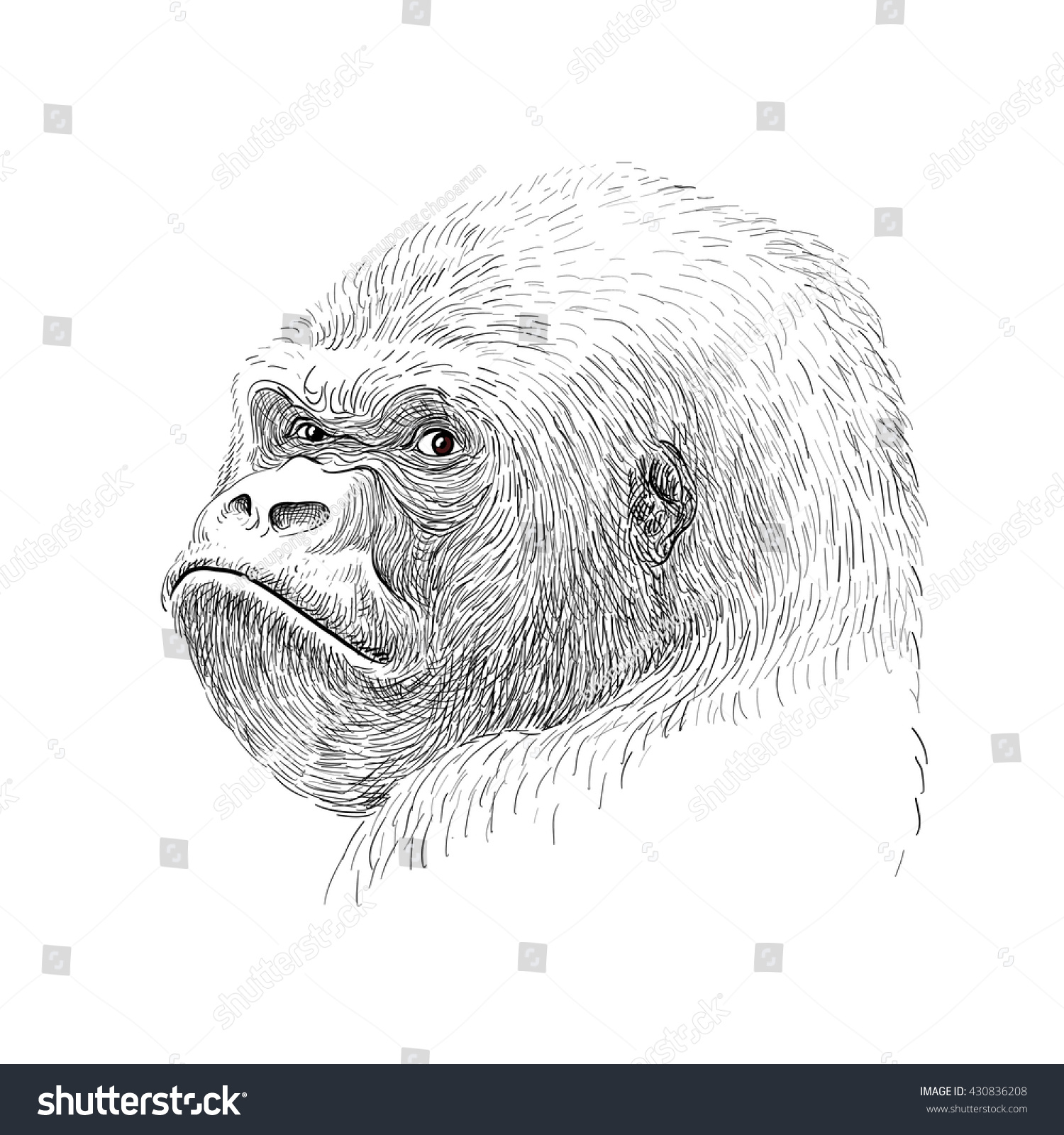 Gorilla face drawing for kids