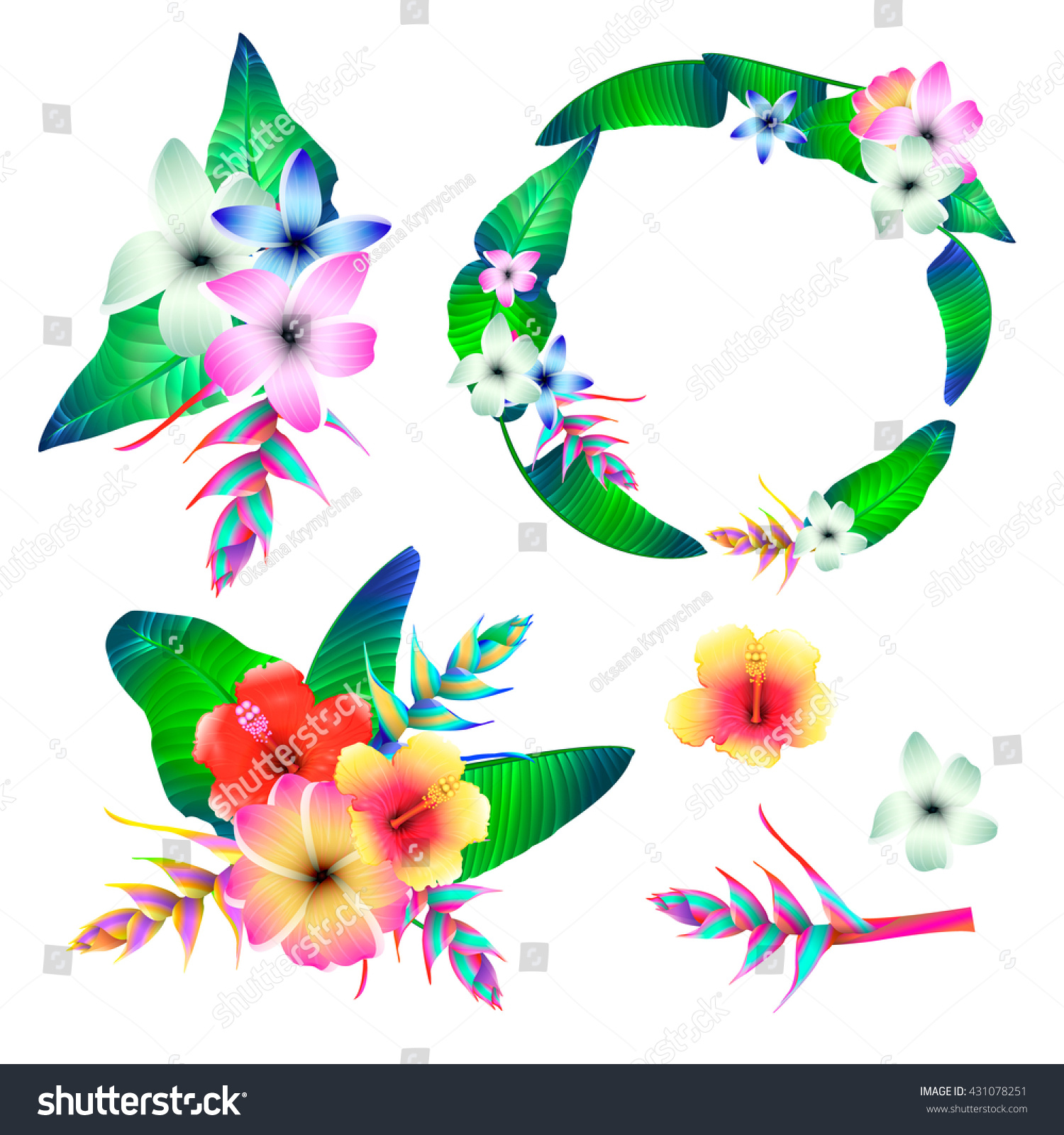 Set Hibiscus Heliconia Tropical Flower Parts Stock Vector Royalty
