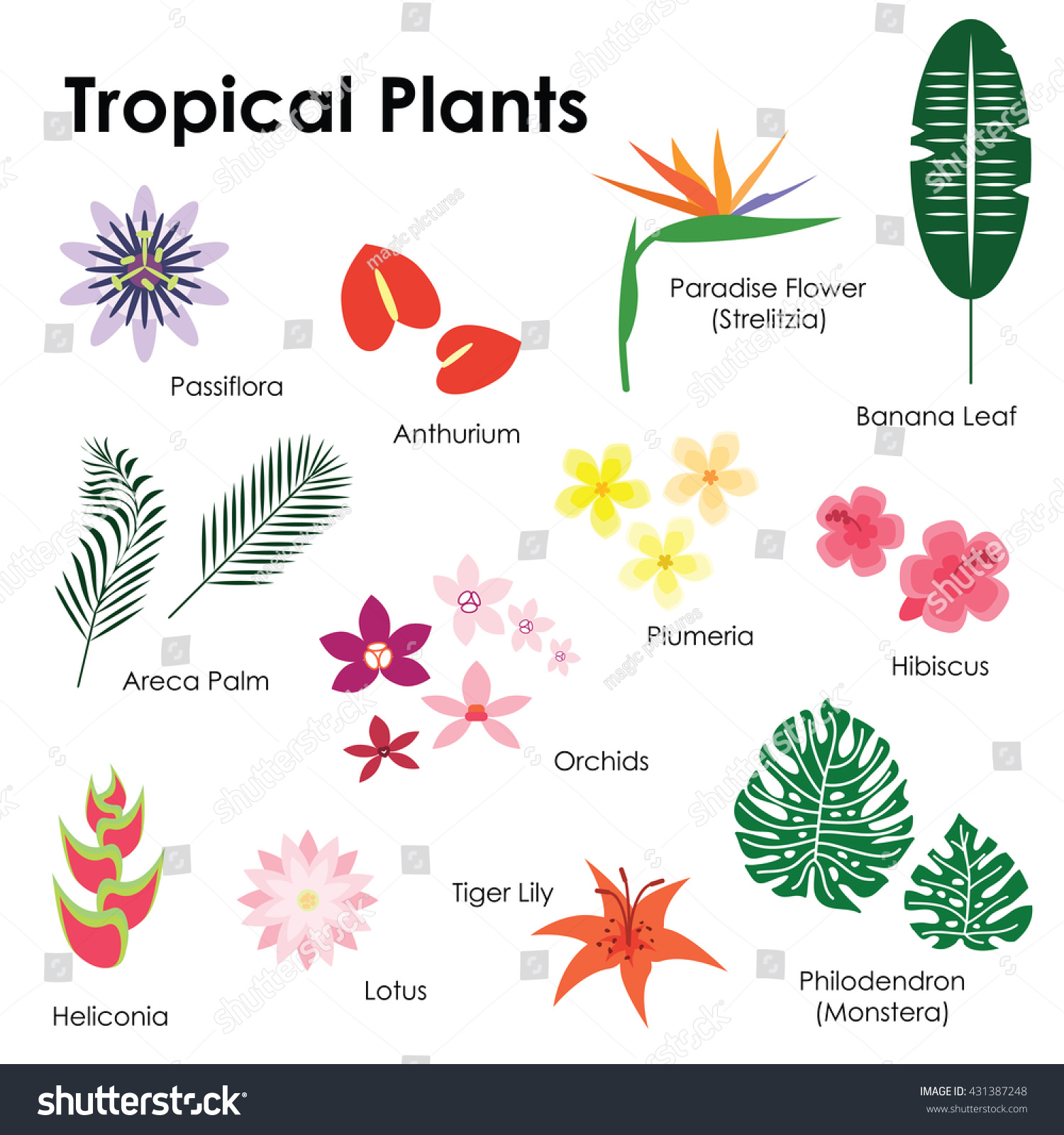 Image Gallery Names Of Foliage Plants