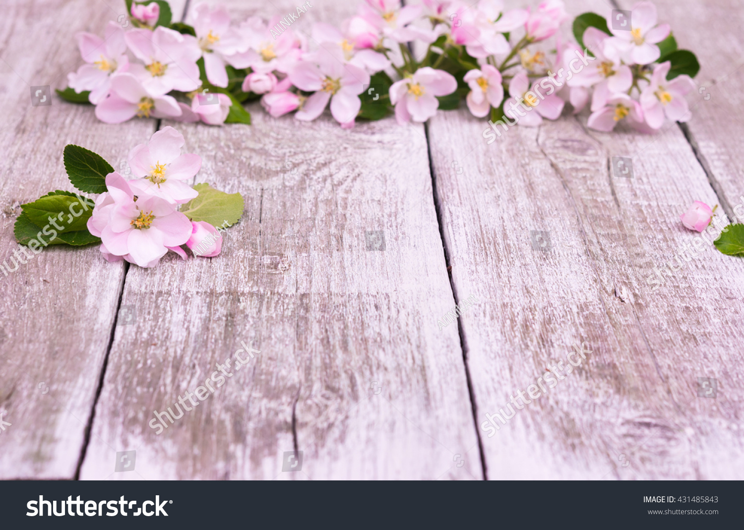 Flowers Apple Tree Blossoms On Rustic Wooden Background With Copy Space For Greeting Message
