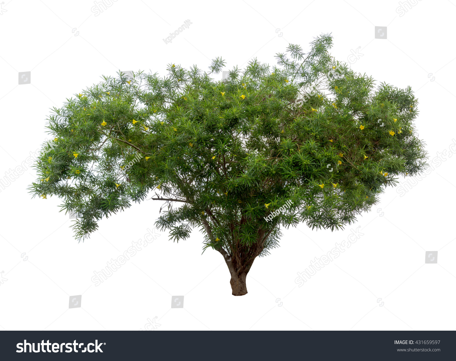 Isolated Tree Small Yellow Flowers On Stock Photo Royalty Free