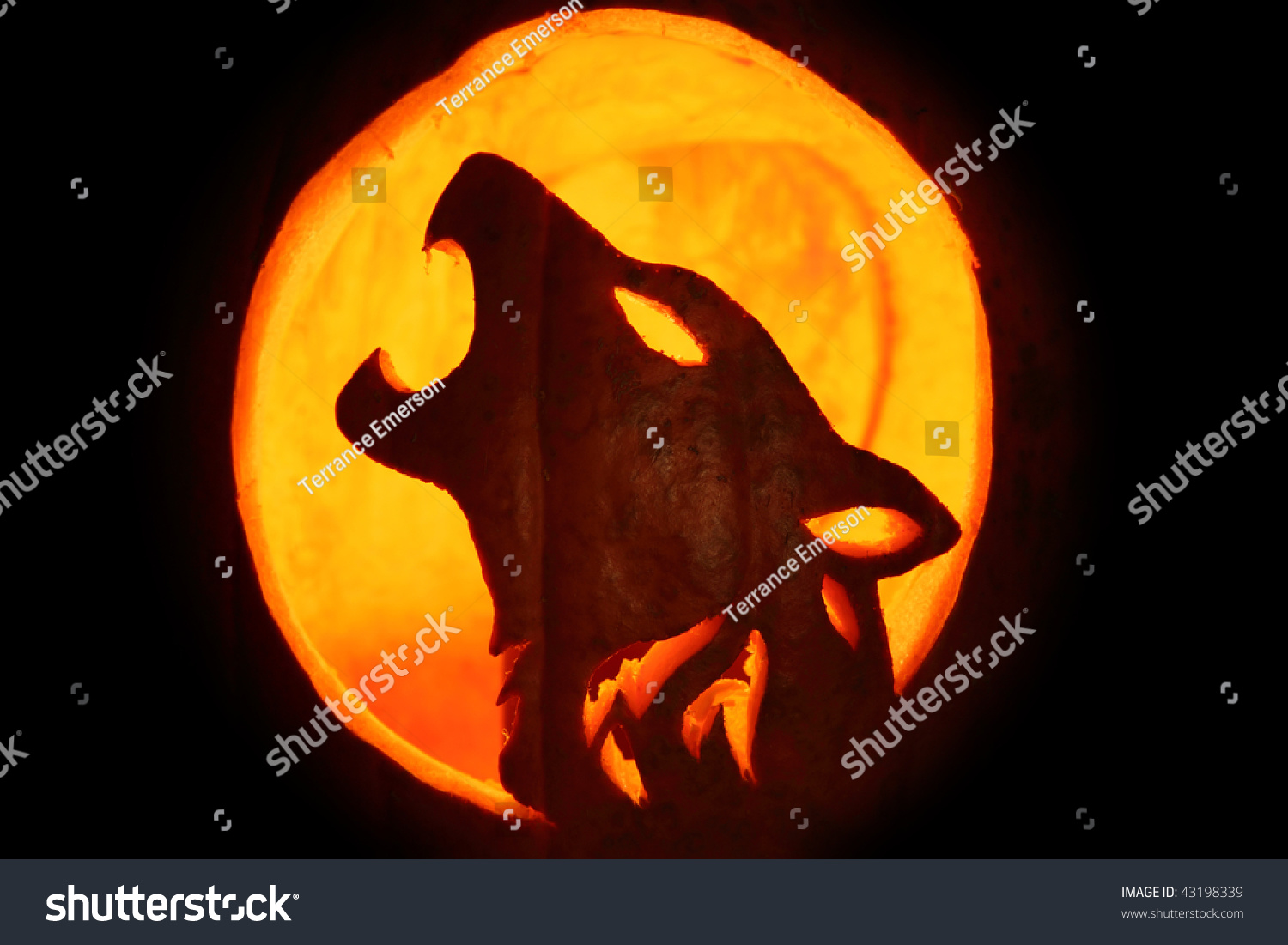 Silhouette halloween pumpkin carved into howling stock for Pumpkin carving silhouettes