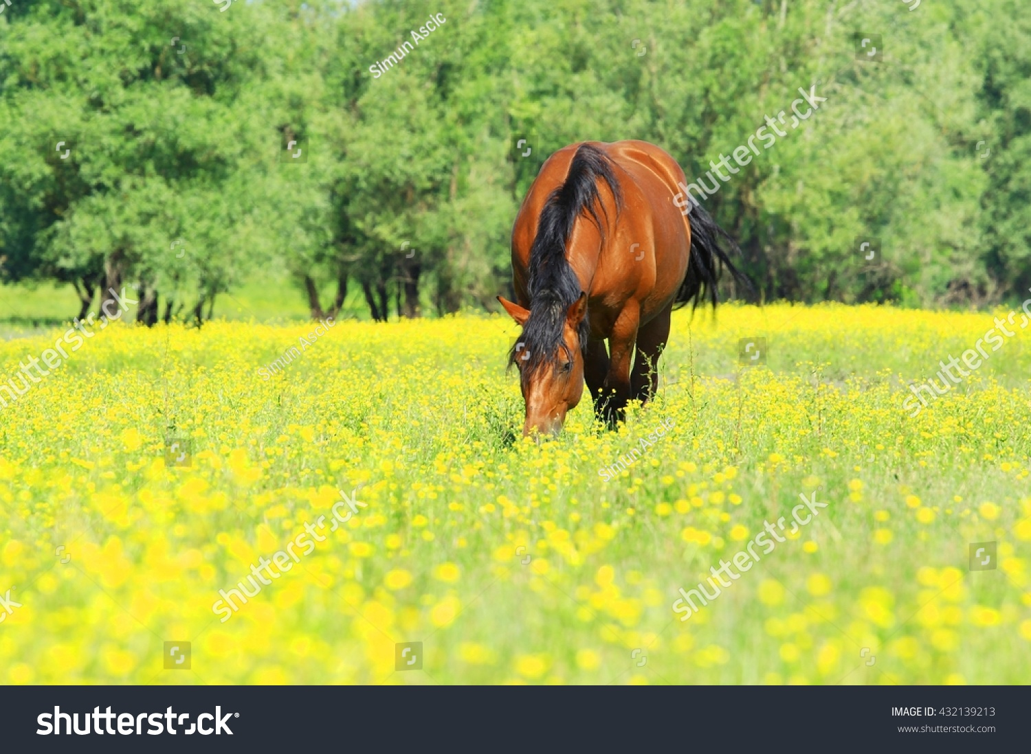 Beautiful Horse Pasture On Meadow Yellow Stock Photo Edit Now