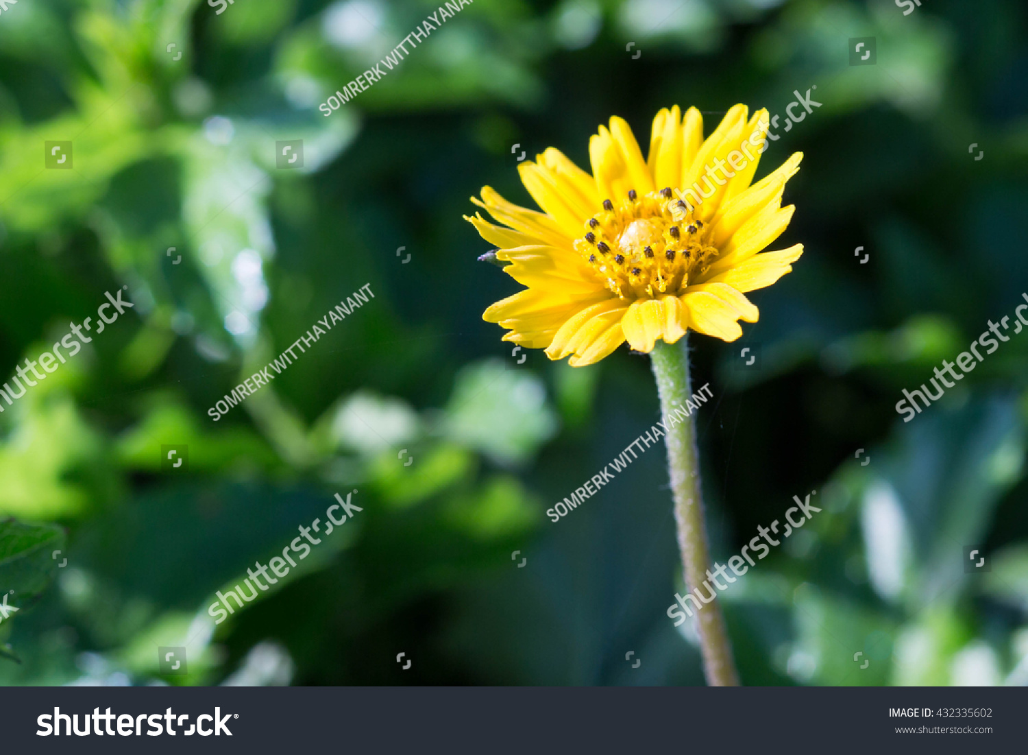 Tiny Yellow Flowers Blooming On Fresh Stock Photo Edit Now