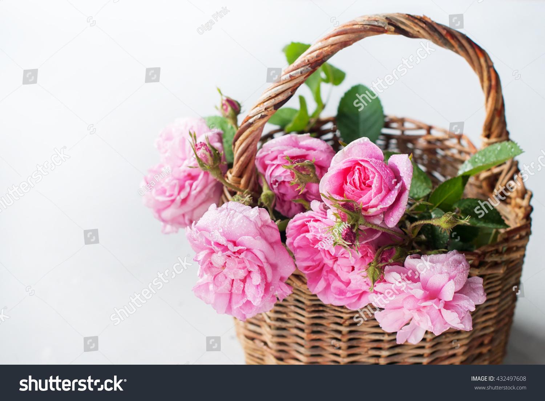 Basket Pink Dog Rose Canina Flowers Stock Photo (Edit Now) 432497608 ...