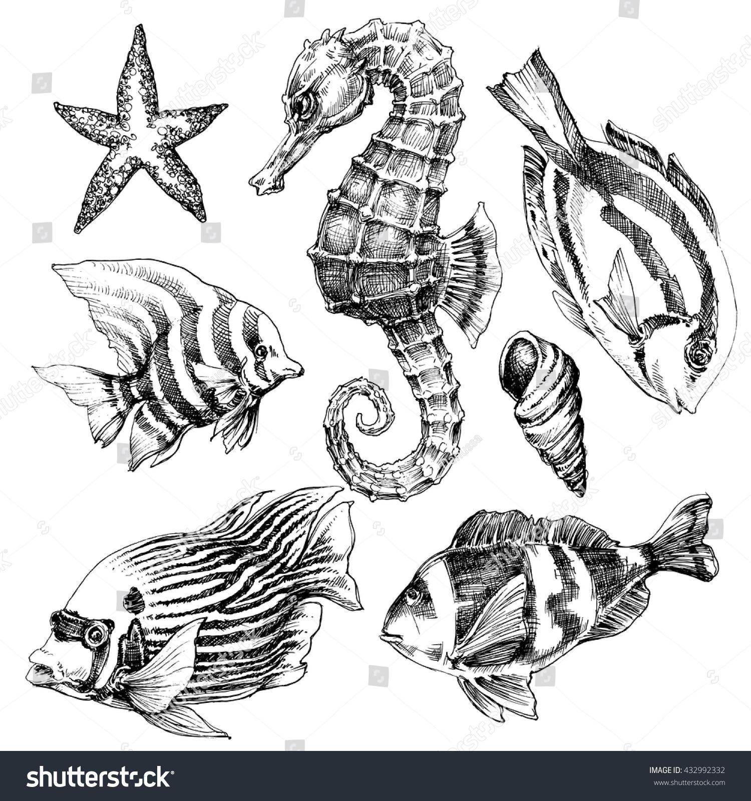 28 Hand Drawing Marine Benthos Sea Clipart Of Sea