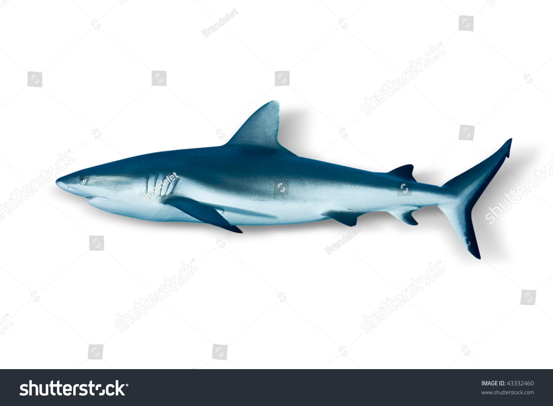shark fin white background - photo #13