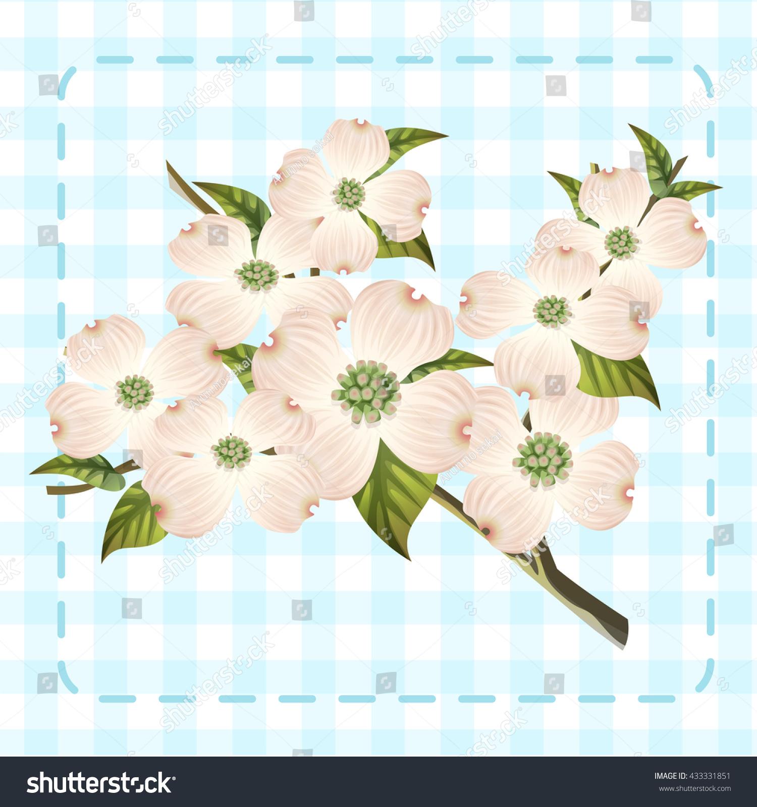 White Dogwood Cornus Hanamizuki Flower Illustration Stock Vector ...