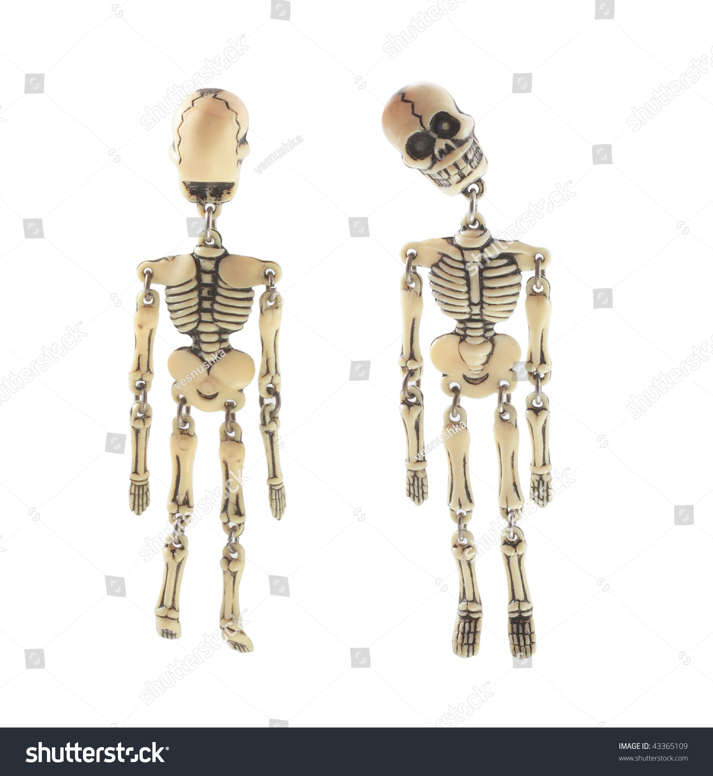 Human Skeleton Isolated White Front Back Stock Photo Edit Now