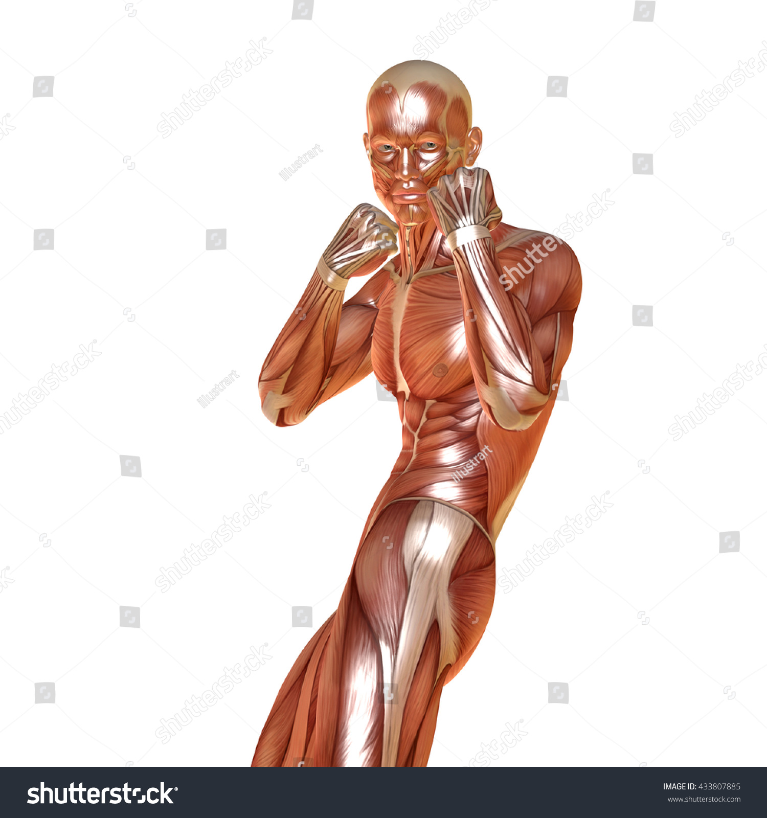 Royalty Free Stock Illustration Of 3 D Render Male Muscular Anatomy