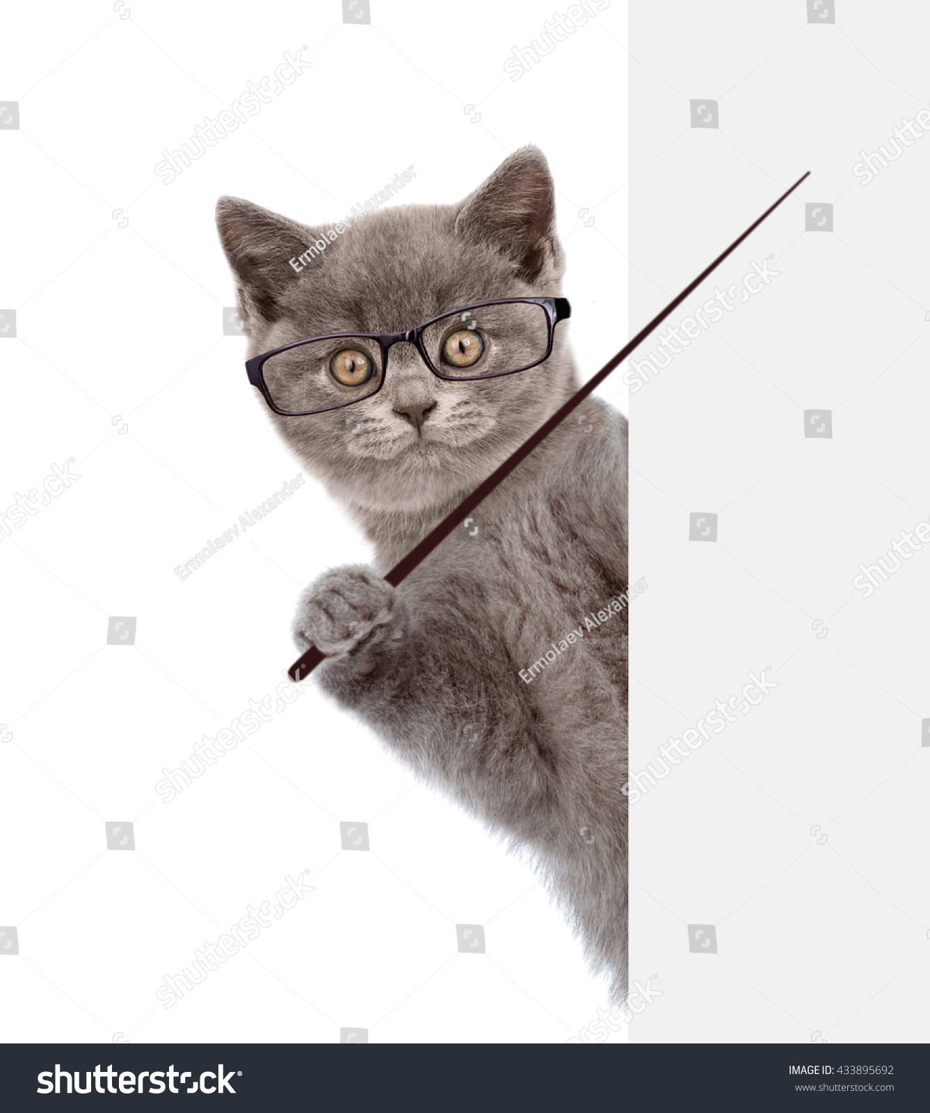 cat wearing glasses holding pointing stick stock photo royalty free
