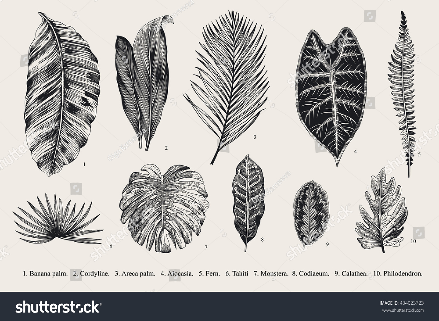 Botanical illustration black and white - photo#19
