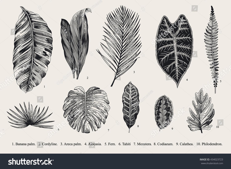 Botanical illustration black and white - photo#19