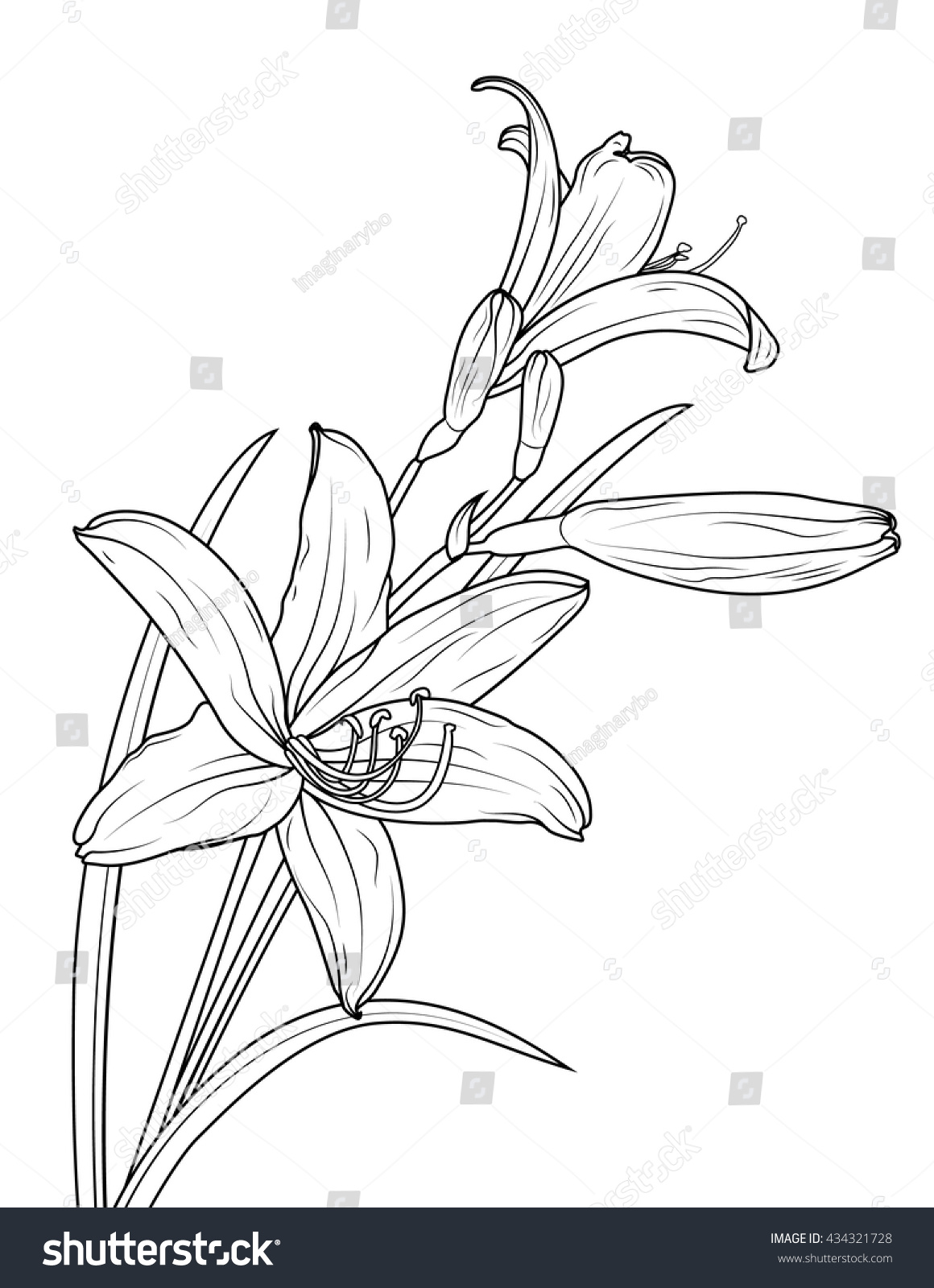 Isolated Elegant White Lily Flowers With Stem And Leaves Vector
