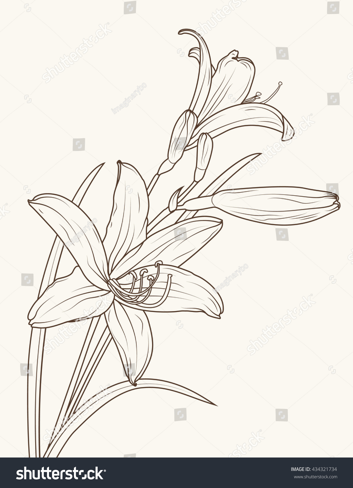 Isolated Elegant Lily Flowers With Stem And Leaves Vector Sketch