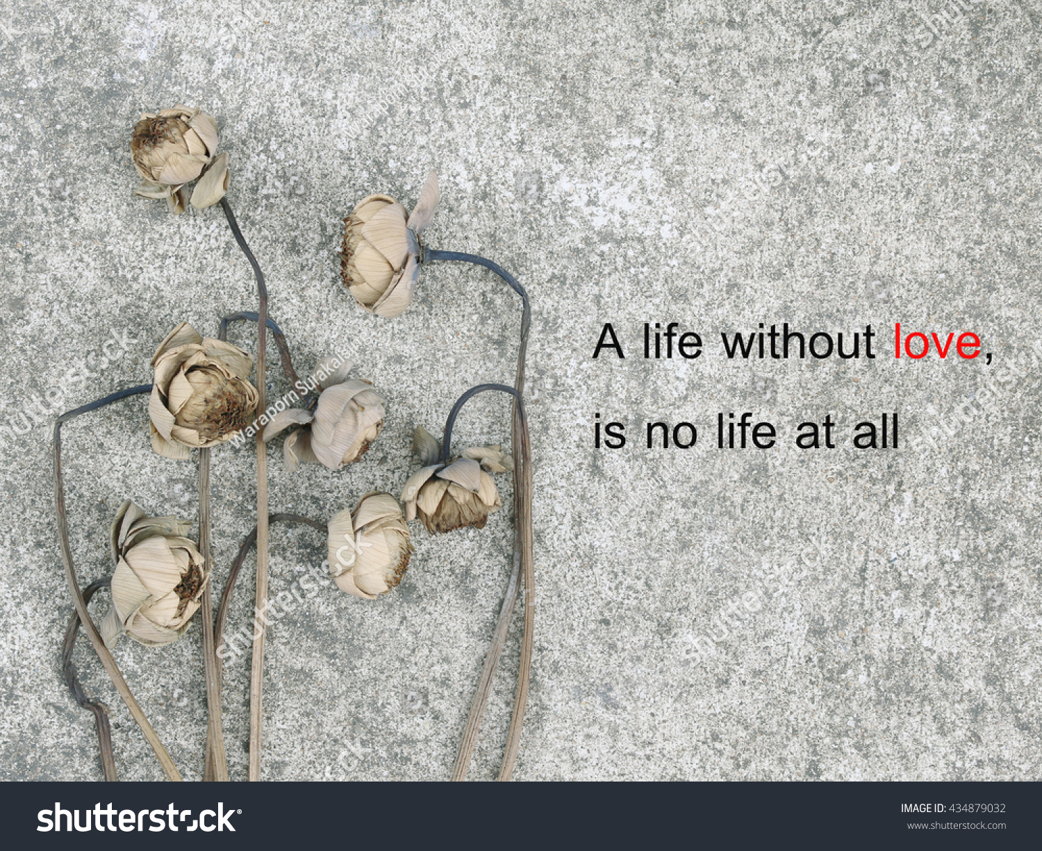 Inspirational Quotes About Life And Love Inspirational Quote Life Without Love No Stock Photo 434879032