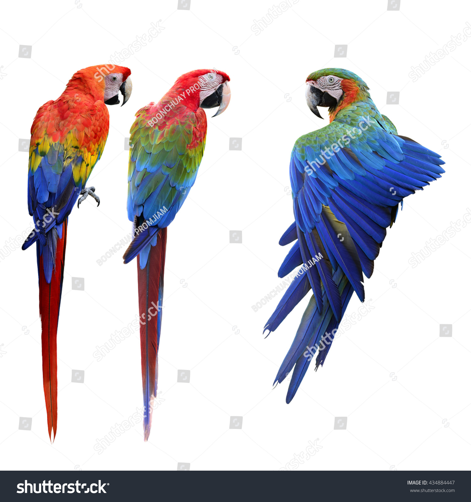 Beautiful Macaw Stock Photo 171074747 - Shutterstock