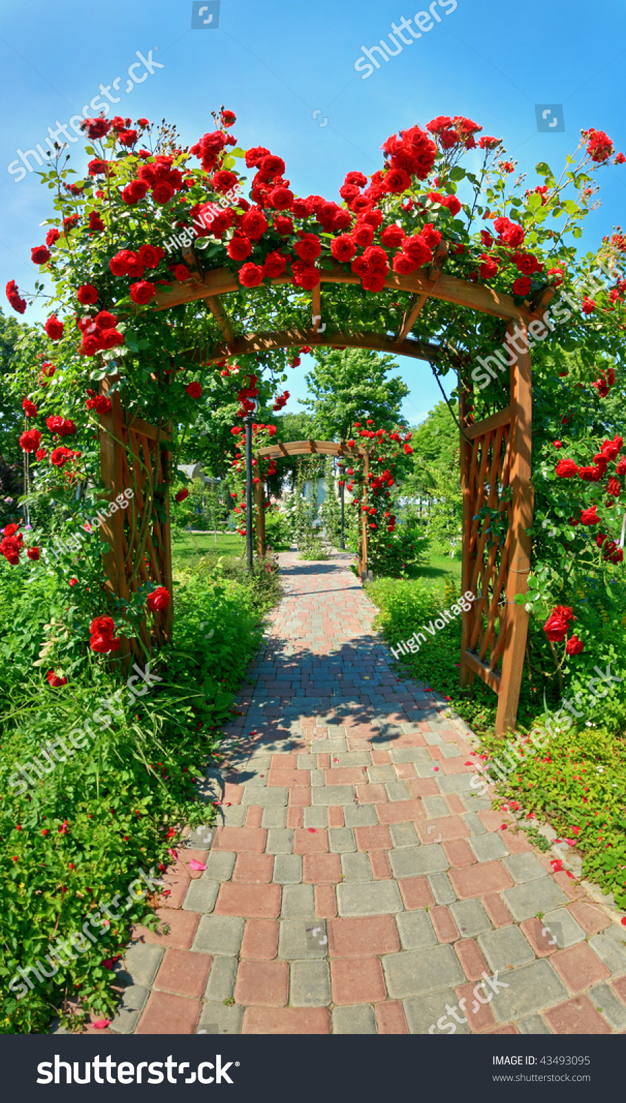 Photo Of Very Nice Garden With Lots Of Roses 43493095
