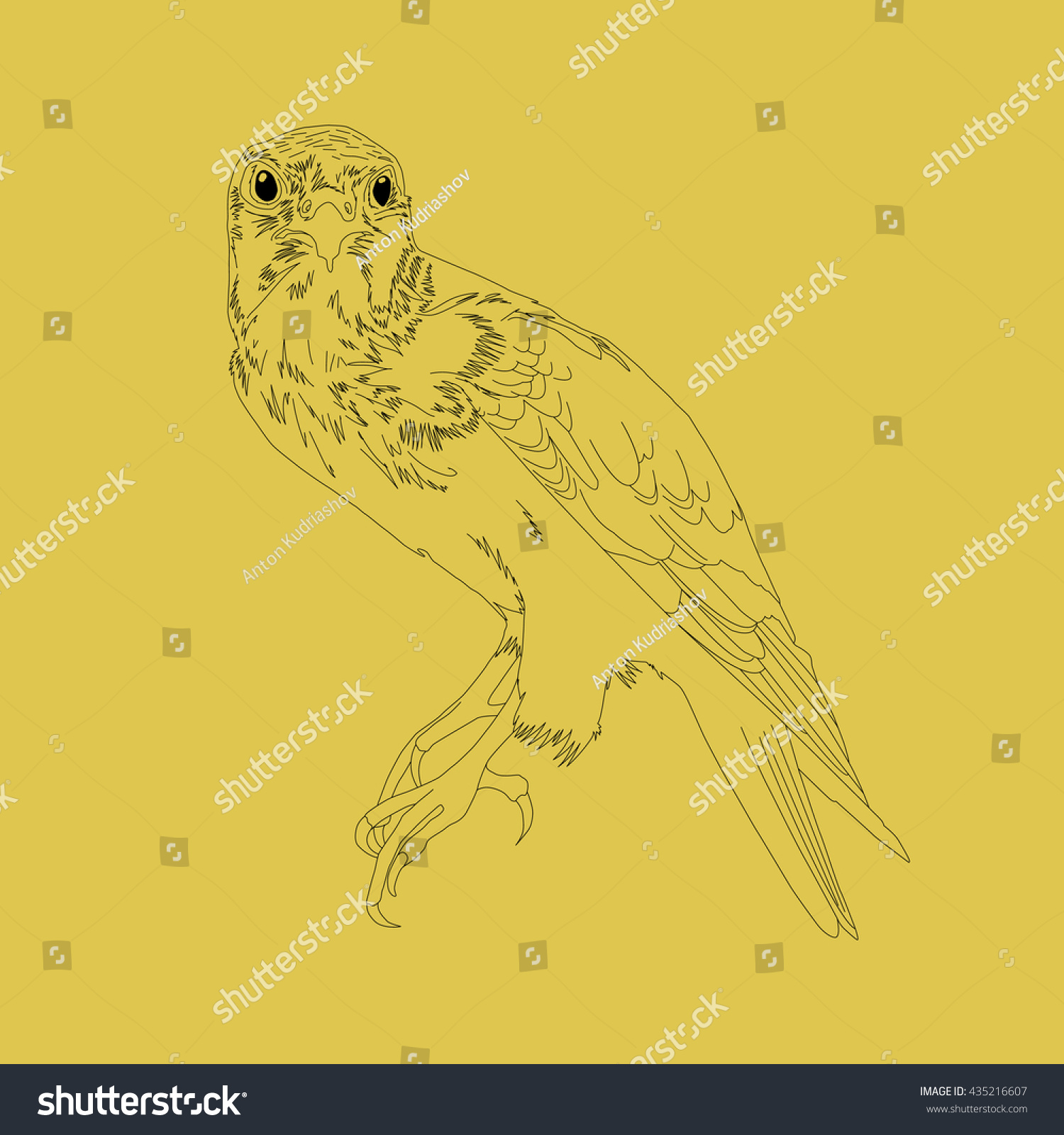 Drawing Vector Isolated Predatory Bird Outlines Stock Vector