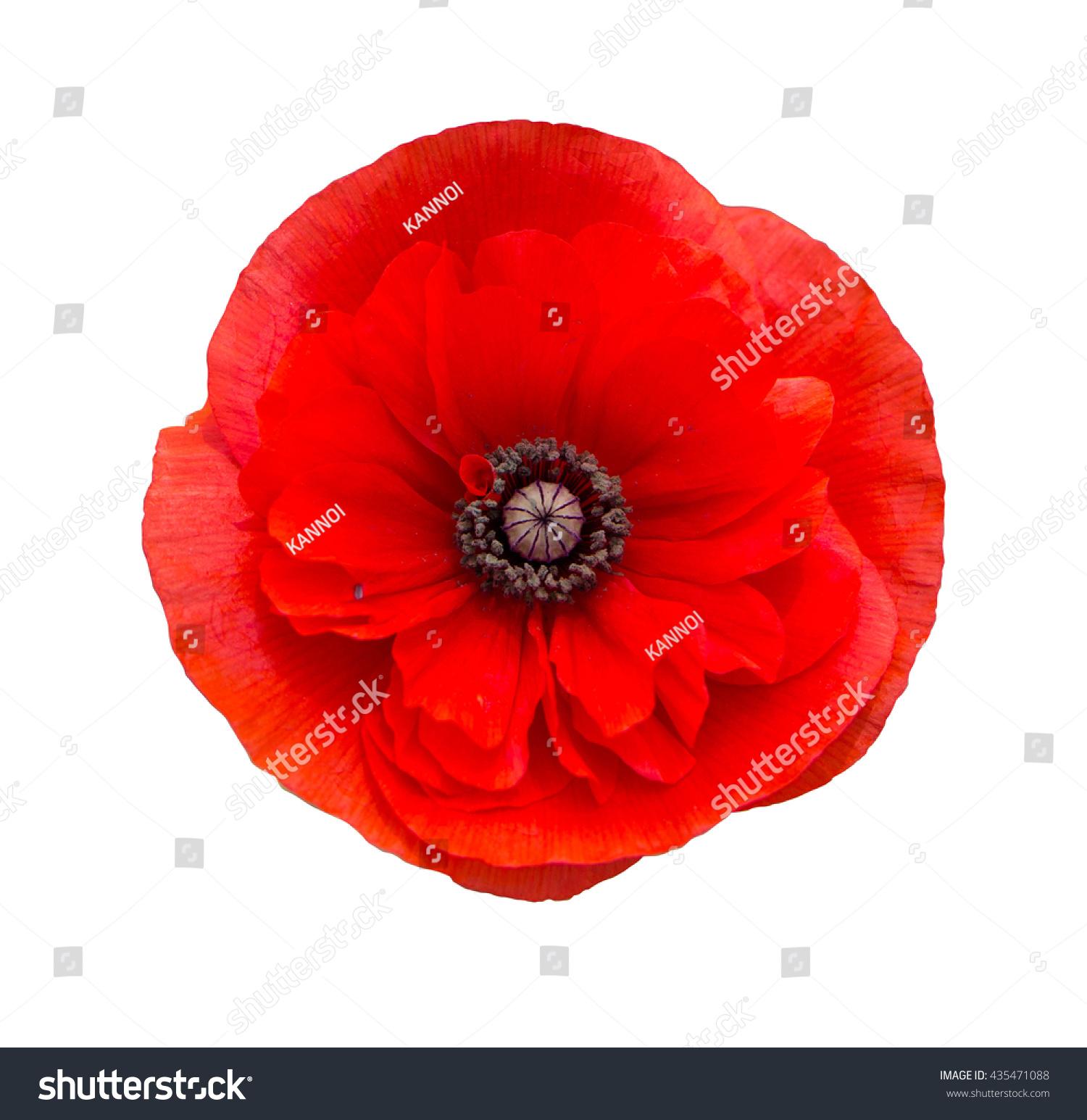 poppy red background - photo #36