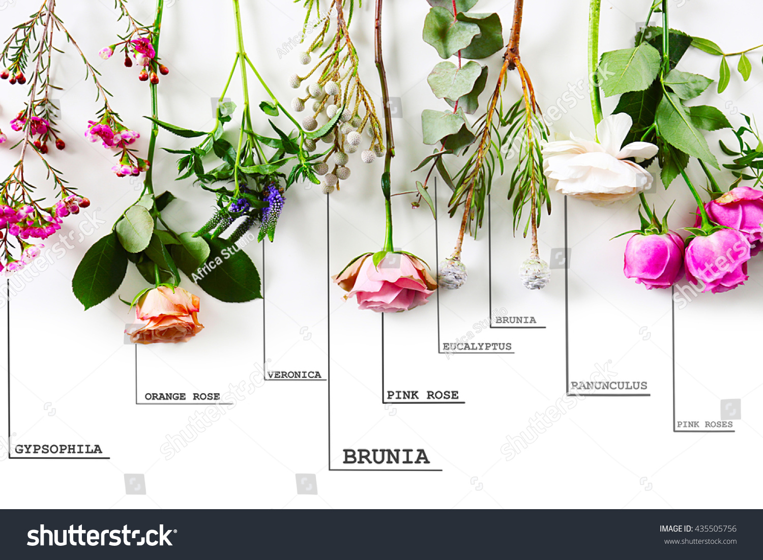 Beautiful Various Flowers Names On White Stock Photo Royalty Free