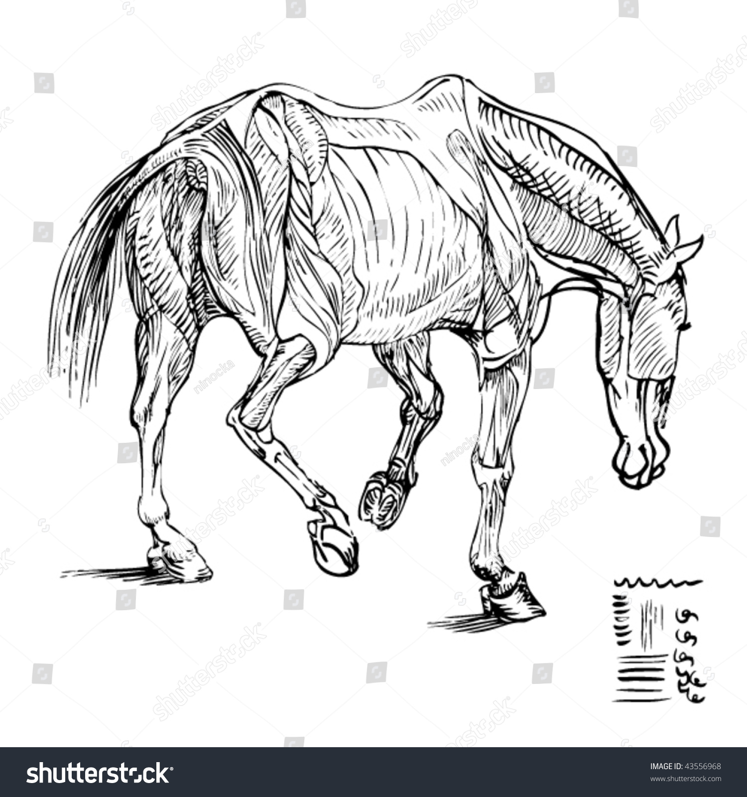 Stock Vector Illustration Ink Drawing Study Stock Vector 43556968 ...