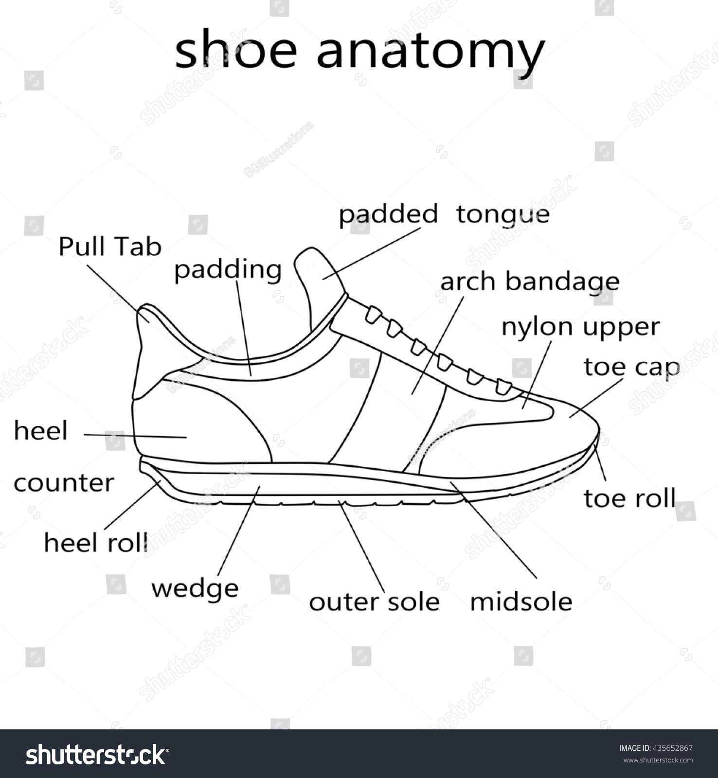 Fashion Illustration Raster Illustration Anatomy Shoe Stock ...