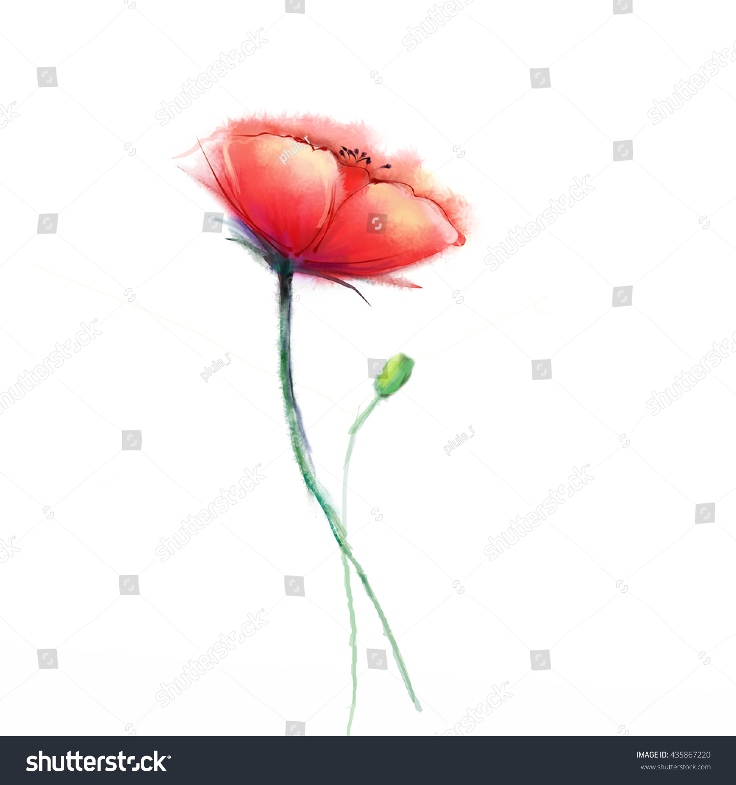 Watercolor painting poppy flower isolated flowers stock illustration watercolor painting poppy flower isolated flowers on white background pink and red poppy flower mightylinksfo