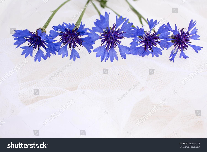 Cornflowers Blue Flowers White Background Flowers Stock Photo Edit