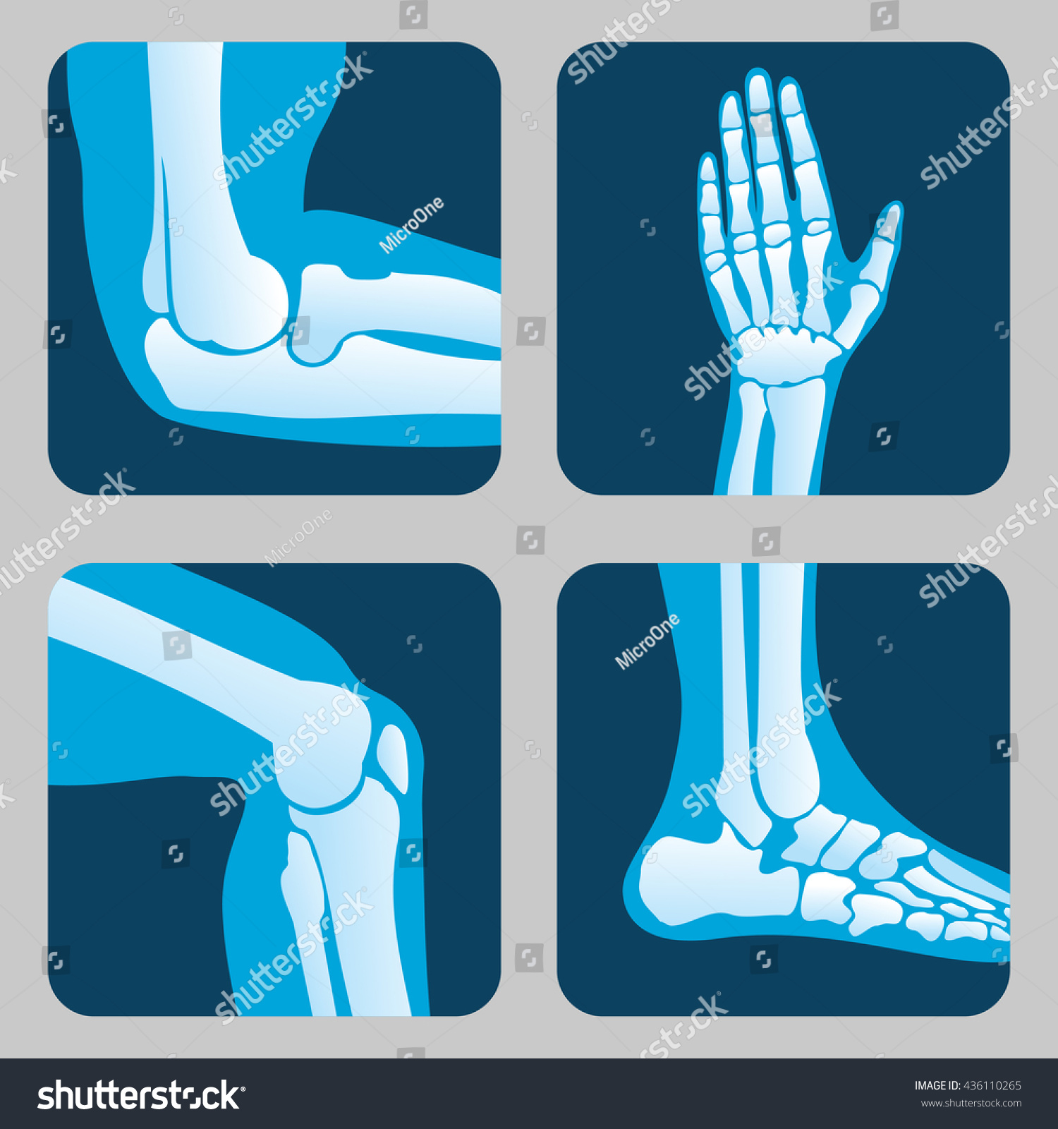 Human Joints Knee Elbow Joint Ankle Stock Vector (Royalty Free ...