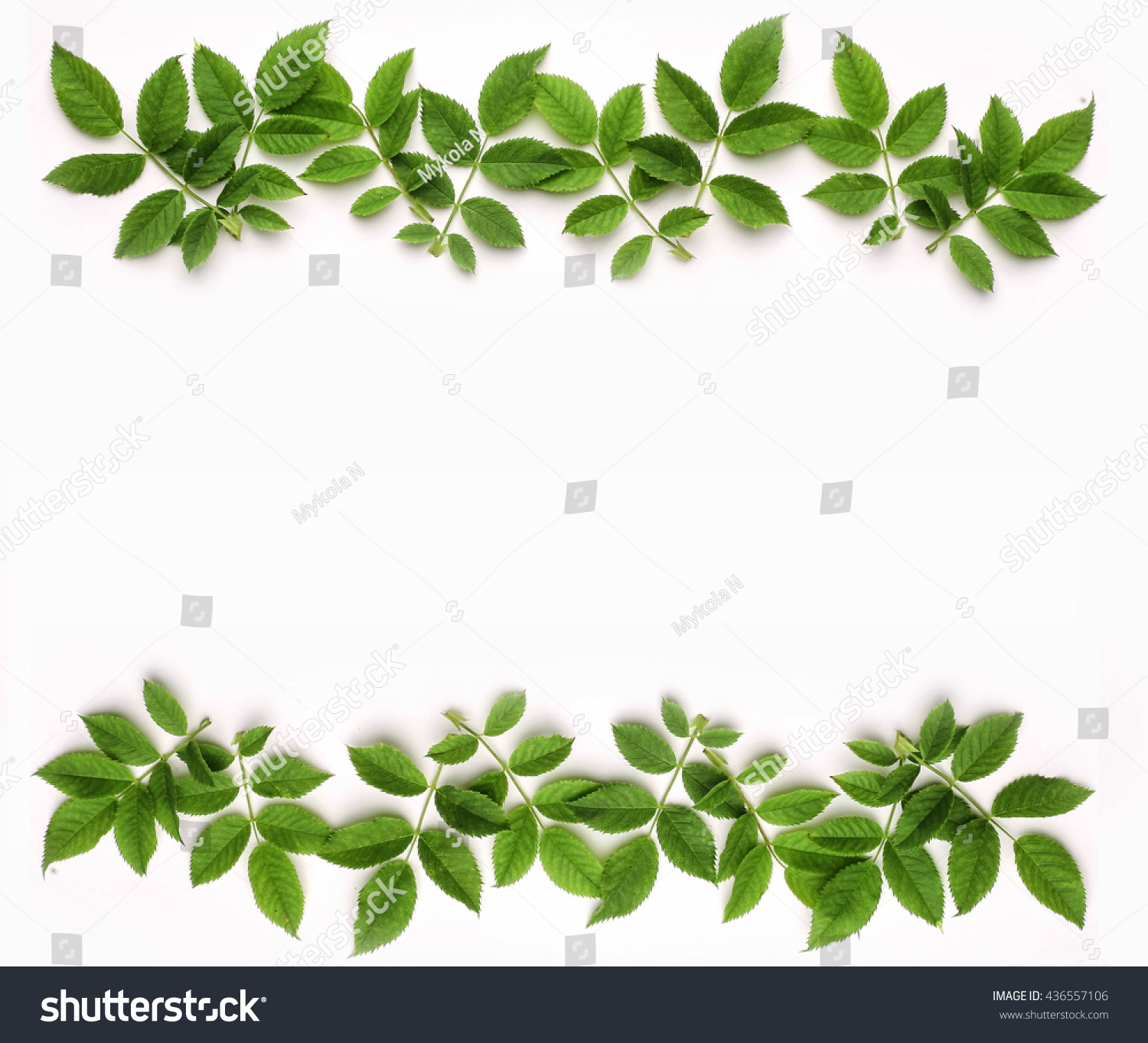 Floral Border Green Rose On White Stock Photo 436557106