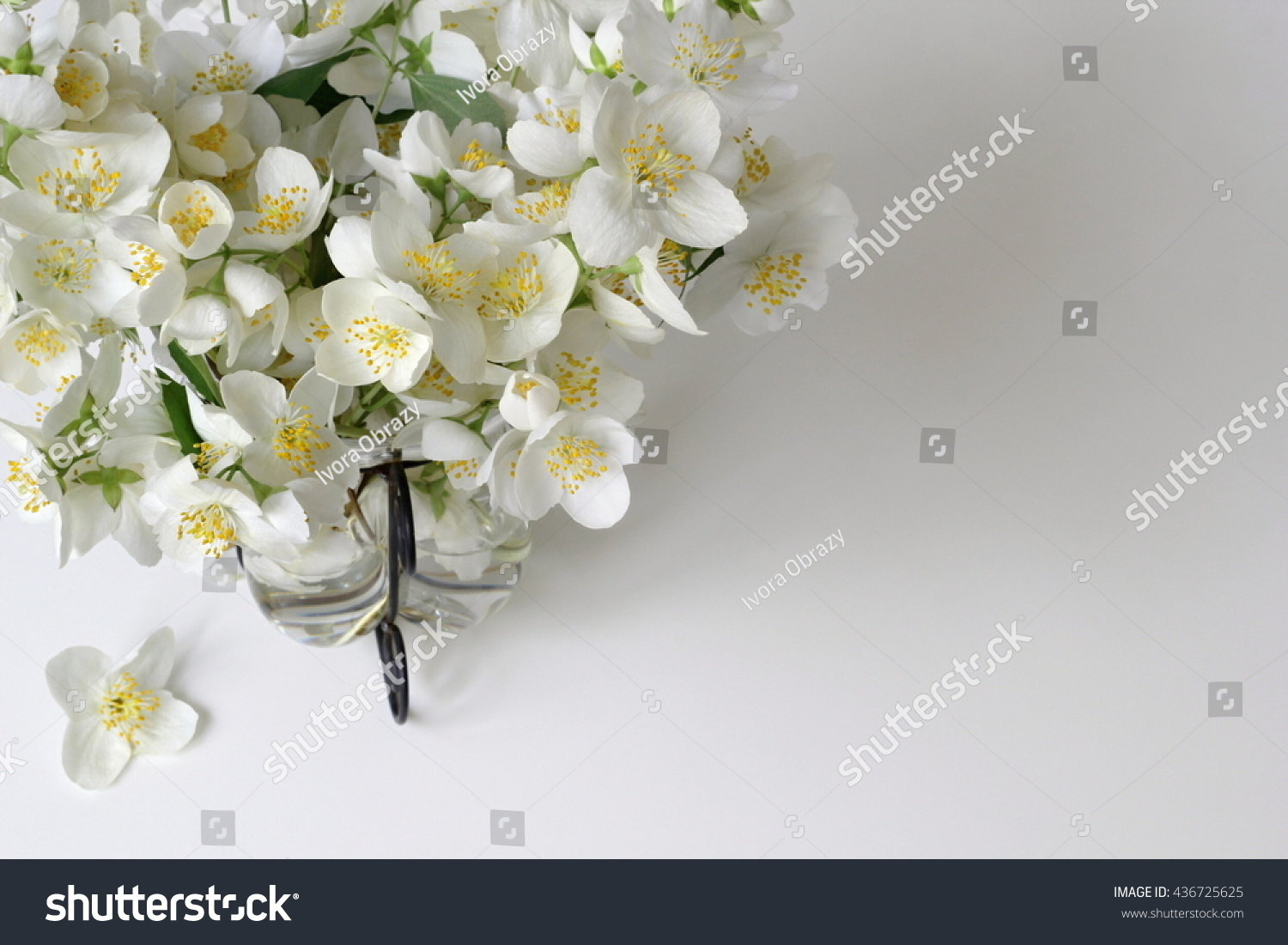 Bouquet White Jasmine Flowers Vase High Stock Photo Edit Now