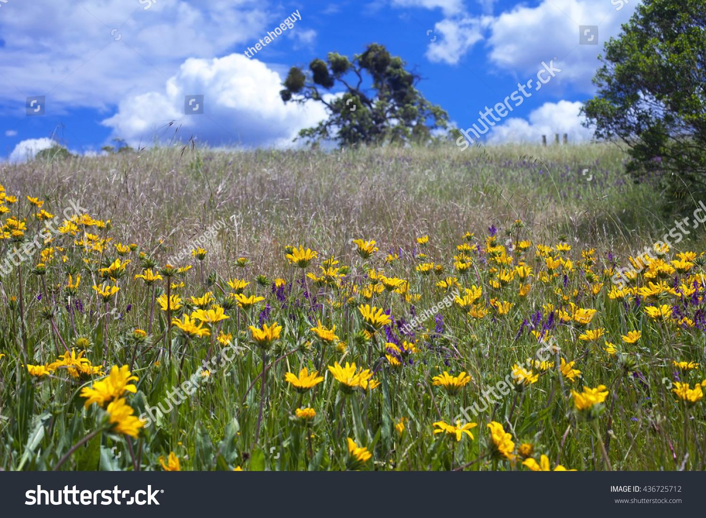 Spring flowers local california park stock photo 436725712 spring flowers local california park stock photo 436725712 shutterstock mightylinksfo