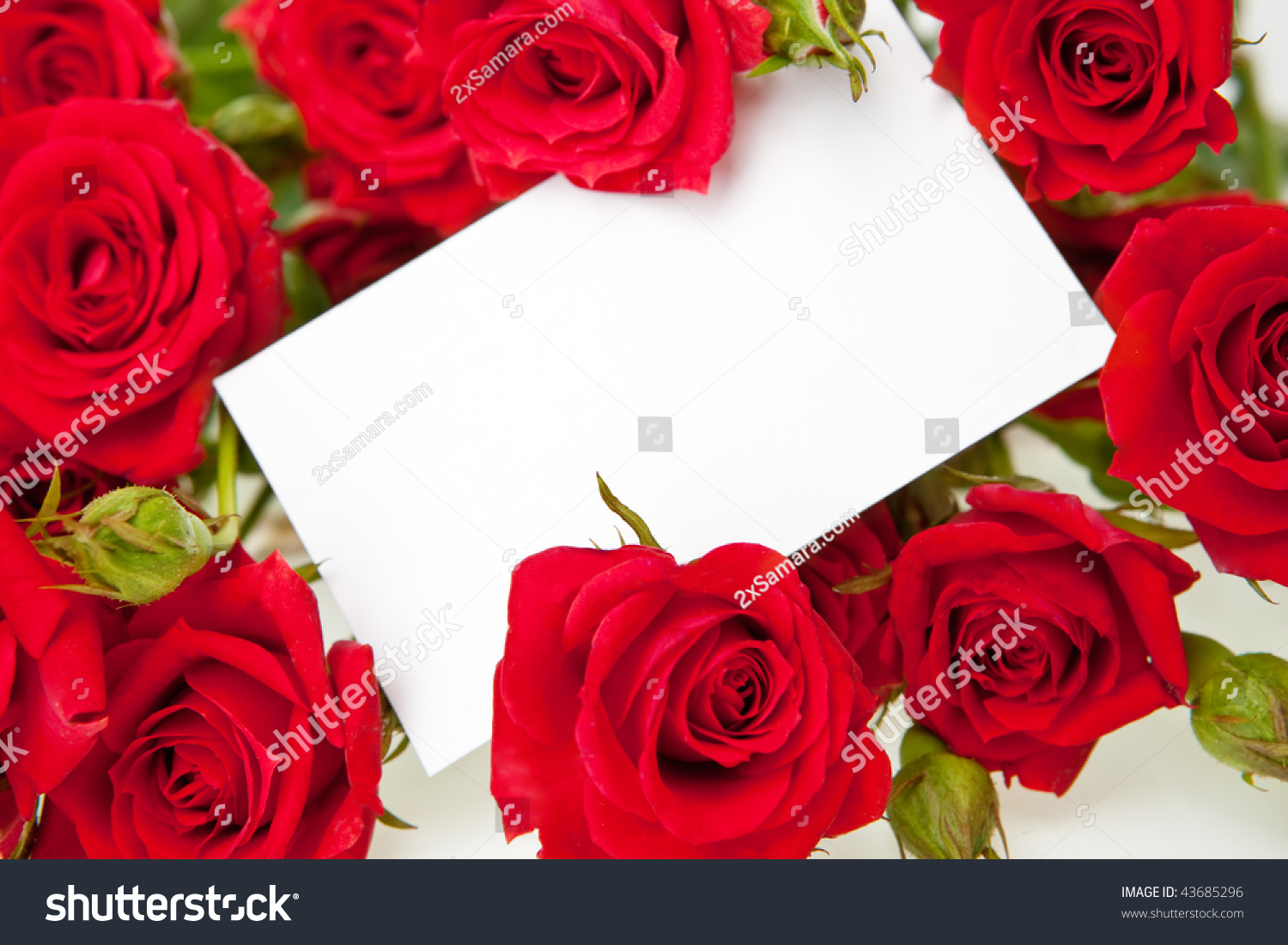Red Roses Blank Invitation Card Stock Photo (Royalty Free) 43685296 ...