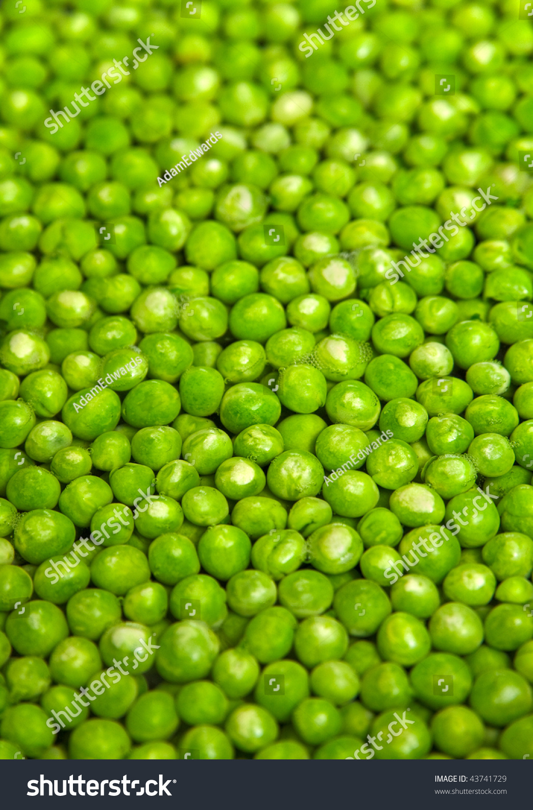 Garden Peas Together Hot Water Photo Stock Photo 43741729
