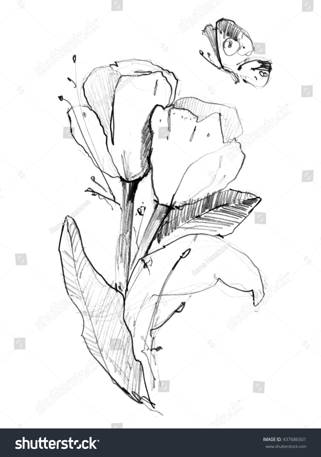 Ink Pencil Watercolor Flower Sketch Line Art Background Hand Drawn Nature Painting