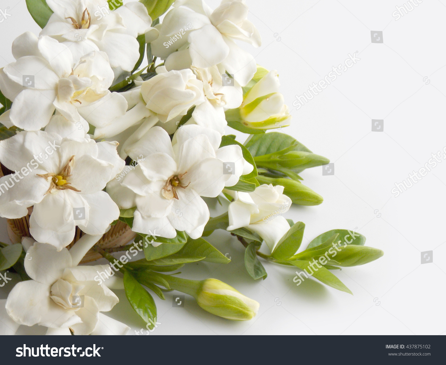Beautiful White Gardenia Flower Bouquet Blooming Stock Photo (Safe ...